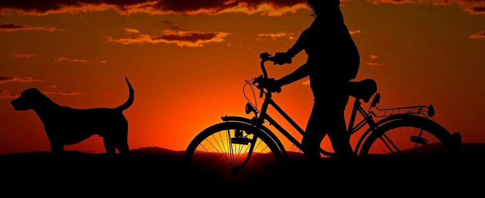 hvalp og cykel